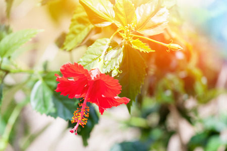 exotic flower: Beautiful exotic flower in the sun