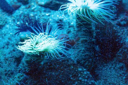 oceanographic: luminous algae in the Oceanographic Museum Stock Photo