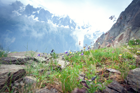 Flowers of the Alps in Chamonix, France Stock Photo