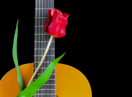 Red Flower on Acoustic Guitar, isolated on black