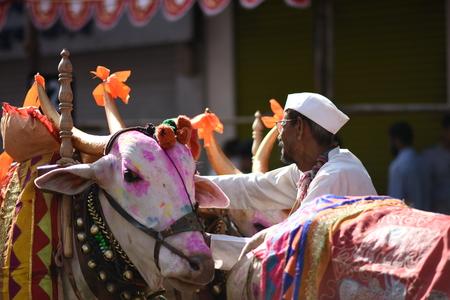 bullock animal: Bullocks and Farmer, India Editorial