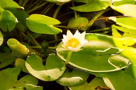 lotus overdag hard licht.
