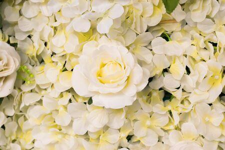 White Rose in de muur patroon concept.