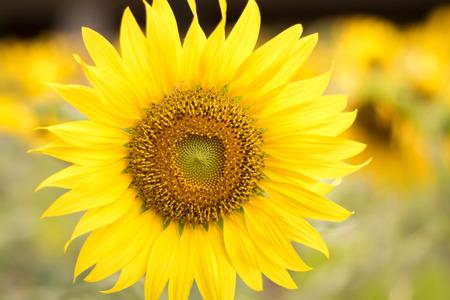 gele bloem planeet.
