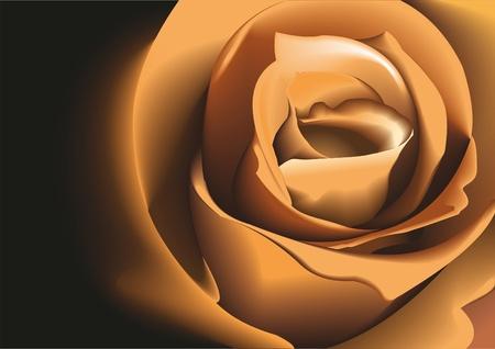 Rose Beige. Vector illustration.