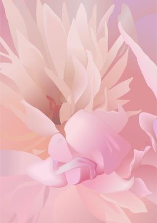 pion: Pion. Peony petals. Vector illustration.
