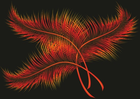 Three red - orange feathers on a black background. Vector illustration
