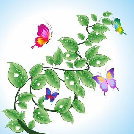 Rama con hojas y gotas de agua con mariposas. Una ilustración vectorial.