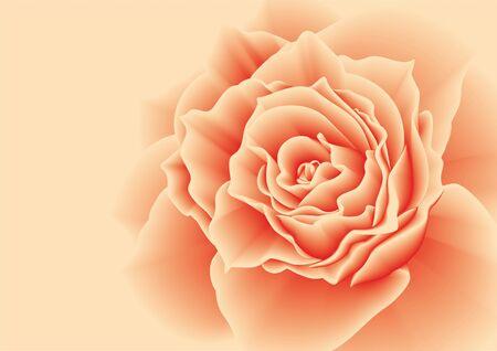 Red rose on a pink background. Vector illustration.