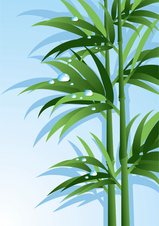 Bamboo with water drops. Vector illustration. Abstract background.