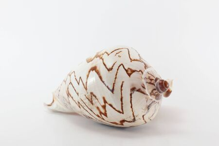Marine sea shell on white background.