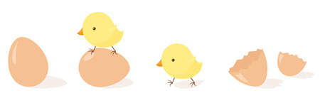 hatched: Freshly hatched chicks with eggs. Illustration