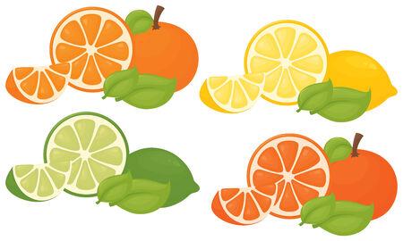 Citrus fruit and segments Illustration