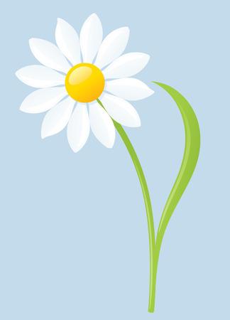 Single white daisy on blue background. Illustration