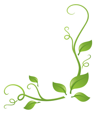 vine and leaves of vine: Curly, leafy page corner decoration.