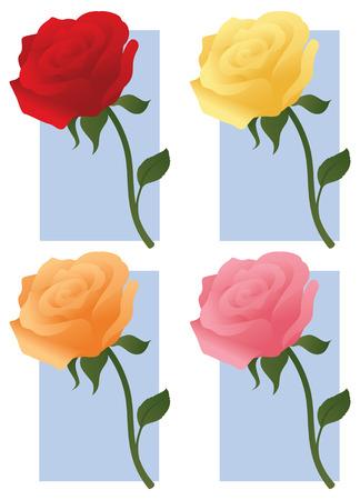 rosas naranjas: Cuatro rosas en diferentes colores.