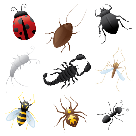 creepy crawly: Collection of creepy crawly insects. Illustration