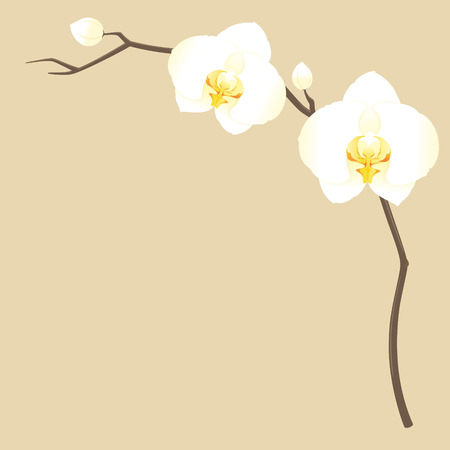 white orchids: Sprig of delicate white orchids. Illustration