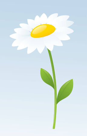 white daisy: Single white daisy on pale blue background.