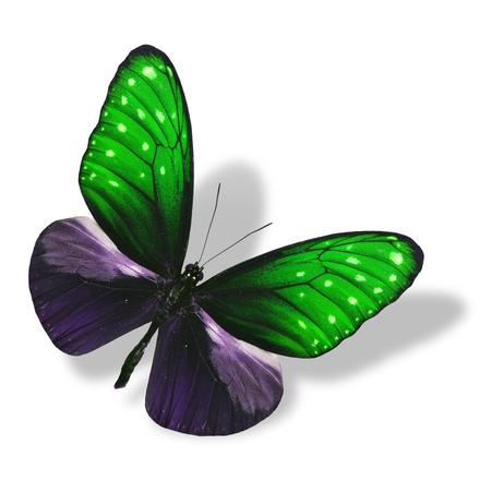 mariposa verde: El volar hermoso de la mariposa verde aislado en blanco con la sombra suave