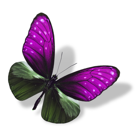 pink butterfly: Beautiful Flying Pink Butterfly isolated on white with soft shadow Stock Photo