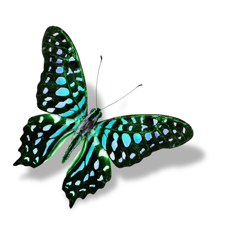 Colorful Blue butterfly flying isolated on white with soft shadow photo
