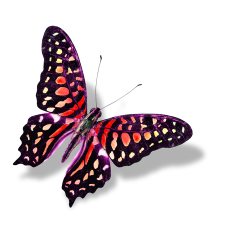 Colorful Red butterfly flying isolated on white  with soft shadow photo