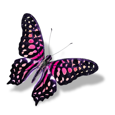 The Beautiful Pink butterfly flying isolated on white  with soft shadow photo