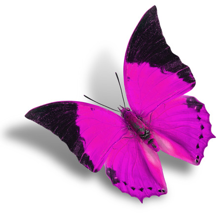 pink butterfly: The flying pink butterfly isolated on white with soft shadow Stock Photo