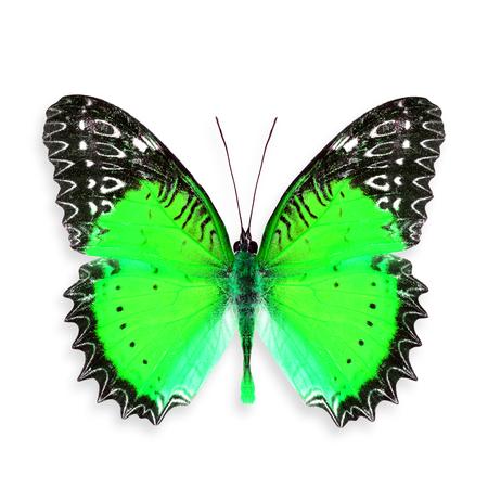 mariposa verde: Hermosa mariposa verde (rojo Lacewing) Foto de archivo