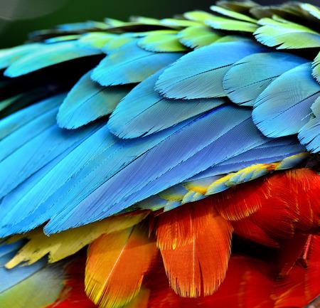 オウム、コンゴウインコの鳥の羽のクローズ アップ