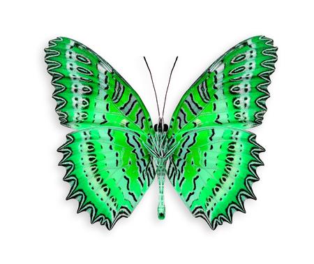 mariposa verde: Gran mariposa verde en el color de lujo aislado en el fondo blanco Foto de archivo