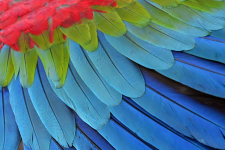 Green-winged Macaw parrot's feathers in details photo