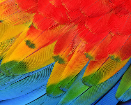 green parrot: Texture and close up details of Scarlet Macaw Feathers Stock Photo