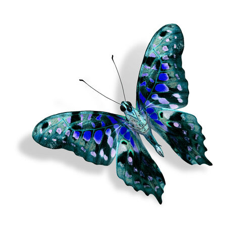 Beautiful Nice Blue Butterfly isolated on white background photo