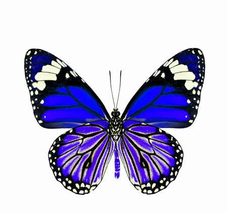 Very beautiful Blue Butterfly isolated on white background photo