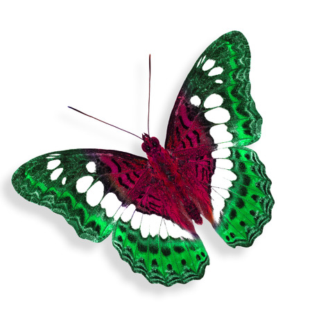 pink butterfly: Flying green and pink butterfly
