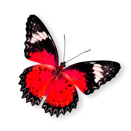 Beautiful Red Butterfly (leopard lacewing) isolated on white background photo