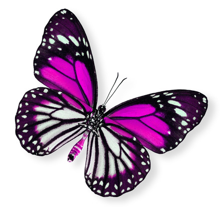 pink butterfly: Beautiful Pink Butterfly (White tiger)