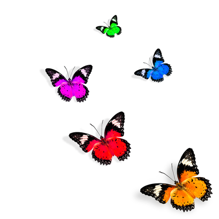 biblis: Beautiful various colors of butterfly flying on white background