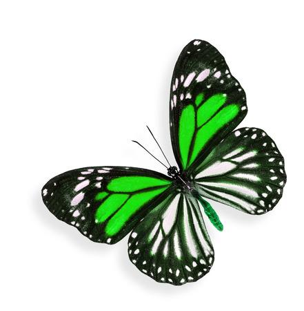 mariposa verde: Mariposa verde con suave sombra debajo en el fondo blanco Foto de archivo