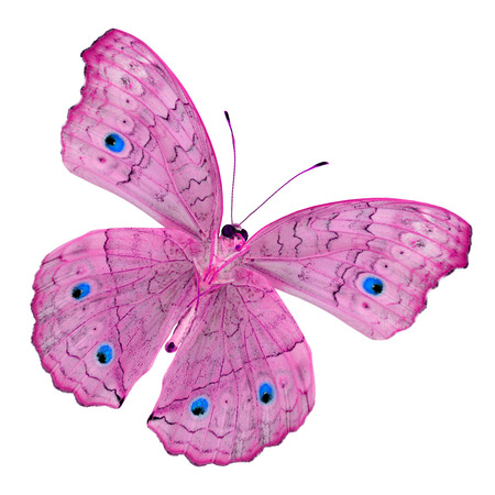 pink butterfly: Pink Butterfly, Grey Pansy, color transparency isolated on white background Stock Photo