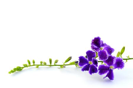 A bunch of purple flower on white background for decoration stock a bunch of purple flower on white background for decoration violet floral sky flower mightylinksfo