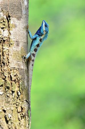 青トカゲのように小さな爬虫類ニースの詳細とその塗装ボディ 写真素材