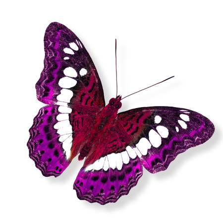 Beautiful flying red and pink butterfly in fancy color photo