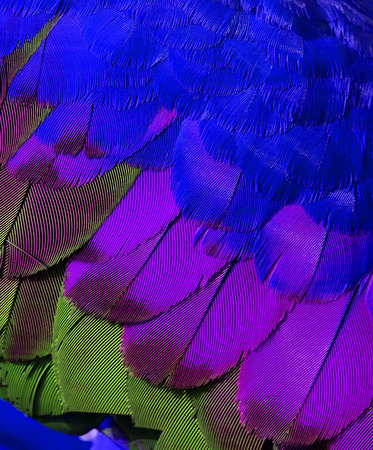 Bird's feathers in very fresh and cool color photo