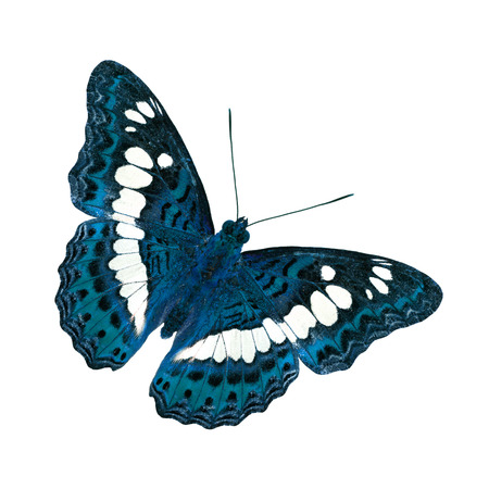 commander: Beautiful Blue Butterfly (Common Commander) in fancy color Stock Photo
