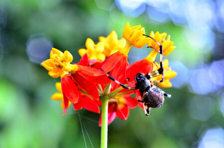 A spider climps up the colorful flower and stick on it photo