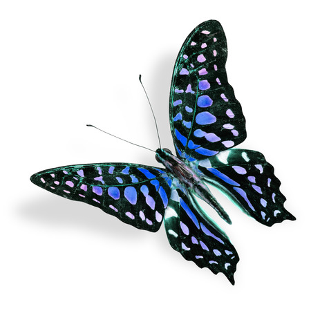 Beautiful Flying Blue spot butterfly, tailed jay in fancy color, with soft shadow beneath photo
