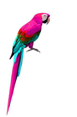 Schöne Scarlet Ara Vogel In Natürlichen Farben Mit Vollständigen ...